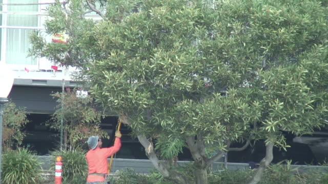 (HD1080i) Trimming Tree