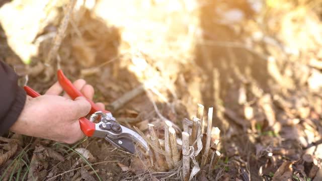trimmen von unkrautpflanzenstielen - wildpflanze stock-videos und b-roll-filmmaterial