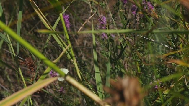 trip in albania - wildpflanze stock-videos und b-roll-filmmaterial
