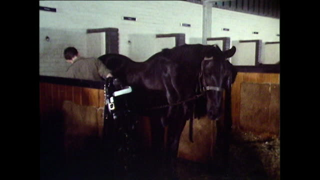 troopers from the household cavalry in stables with horses; 1971 - british military stock videos & royalty-free footage