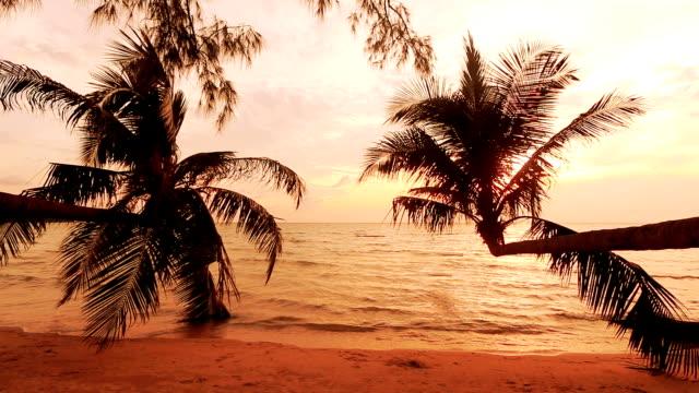 vídeos de stock, filmes e b-roll de tropic praia; pôr-do-sol através de coqueiros tree em noite - vista do mar
