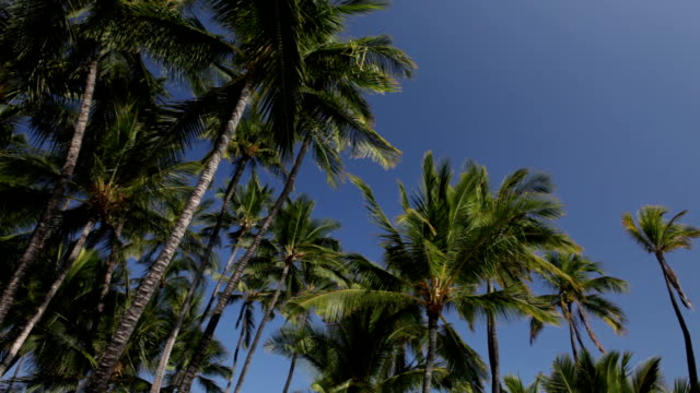 tropic palm grove against clear blue sky - grove stock videos & royalty-free footage