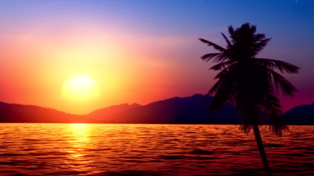 tropic sunset (loopable) - palm tree stock videos & royalty-free footage