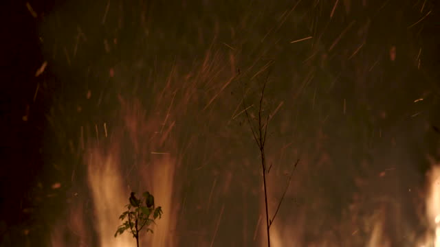 tropical amazon, the largest ecosystem, considered the lungs of the earth, destroyed by illegal burning for grazing cows and soybean crops. - sparks stock videos & royalty-free footage
