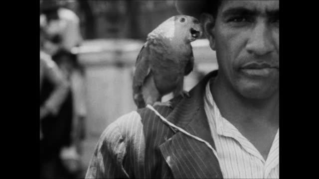vídeos de stock, filmes e b-roll de tropical animals on the streets of rio de janeiro, brazil - 1930
