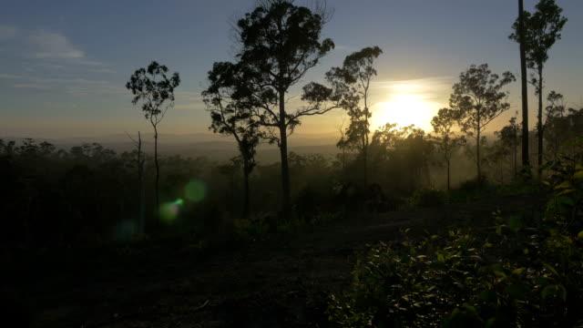 tropical australian landscape at sunrise - bush stock videos & royalty-free footage