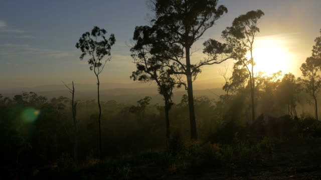 tropical australian landscape at sunrise - victoria australia stock videos & royalty-free footage