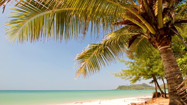 vidéos et rushes de plage tropicale et vert lagon - french overseas territory