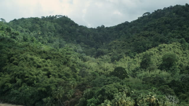 ws ha td tropical beach and jungle, arnos vale, tobago, trinidad and tobago - 2008 stock-videos und b-roll-filmmaterial