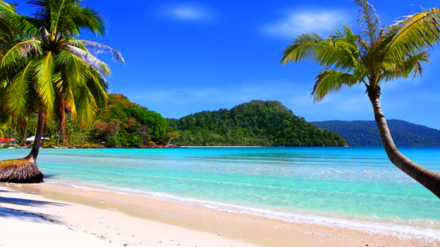 tropical beach and palm tree - tropical tree stock videos & royalty-free footage