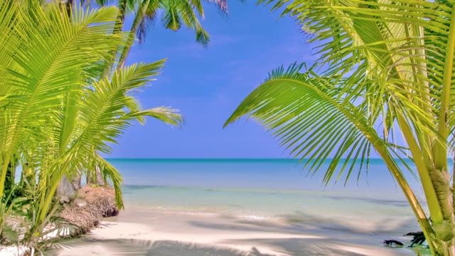 tropical beach and palm tree - tropical tree stock videos and b-roll footage