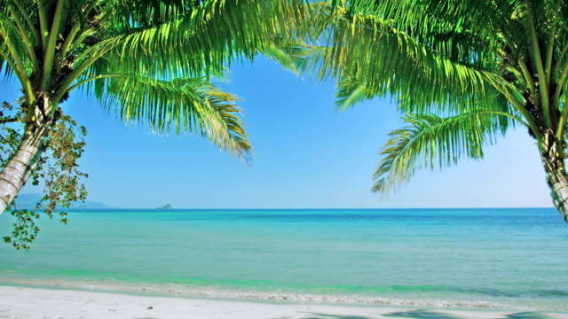 tropical beach and palms - coconut palm tree stock videos & royalty-free footage