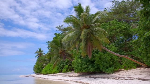 tropical beach anse st. sauveur with palm trees looming over the beach on praslin island , granitic seychelles , archipelago country in the indian ocean - granite rock stock videos & royalty-free footage