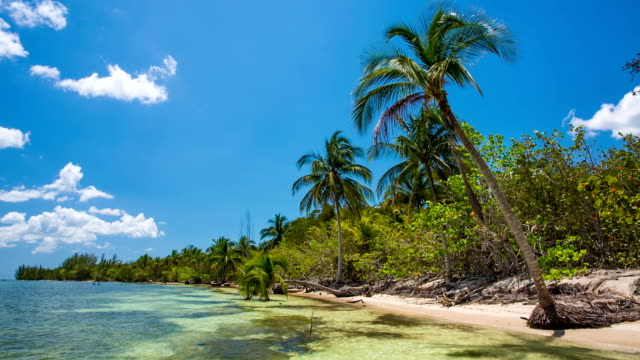 stockvideo's en b-roll-footage met tropical beach coastline in cuba - cuba