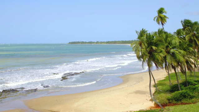 tropical beach in alagoas, brazil - coconut palm tree stock videos & royalty-free footage