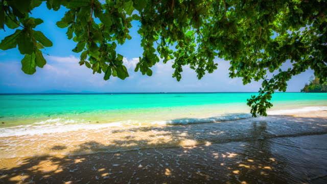 tropical beach in thailand - tropical tree stock videos & royalty-free footage