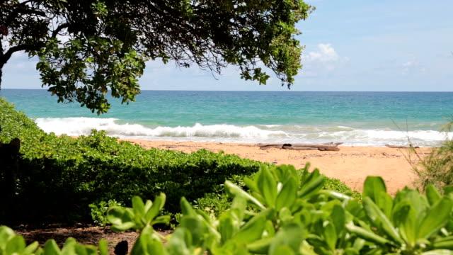 Paisagem de praia Tropical, Havai