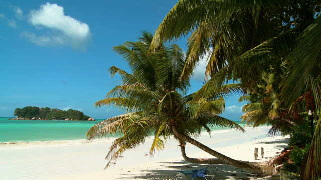 stockvideo's en b-roll-footage met hd: tropical beach of seychelles - tropische boom