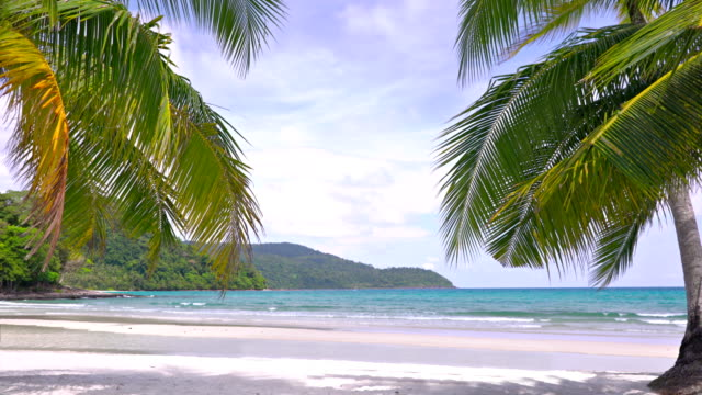 tropical beach. palm tree - idyllic stock videos & royalty-free footage