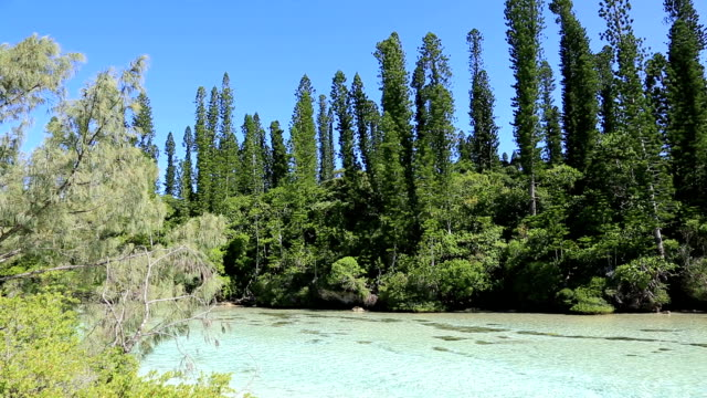 tropical beach paradise, isle of pines, new caledonia - south pacific ocean stock videos & royalty-free footage