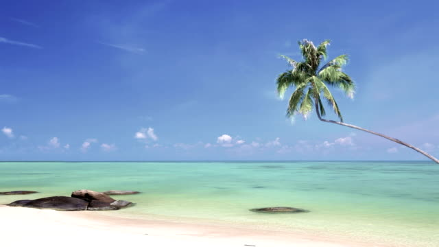 tropical beach paradise with palm tree - tropical tree stock videos and b-roll footage