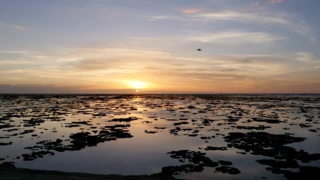 tropical beach sunrise - gezeitentümpel stock-videos und b-roll-filmmaterial