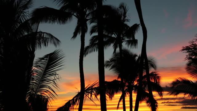 トロピカルビーチの夕日で、ハワイ州マウイ島) - 熱帯の低木点の映像素材/bロール