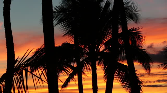 tropical beach sunset in maui, hawaii - palm tree stock videos & royalty-free footage