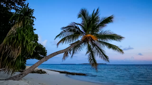 tropical beach to dawn - tropical tree stock videos & royalty-free footage
