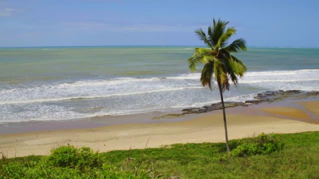 vídeos de stock, filmes e b-roll de praia tropical - coco