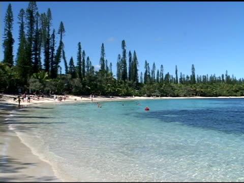 vidéos et rushes de plage tropicale - arbre tropical