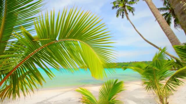 南国のビーチ。 - 熱帯気候点の映像素材/bロール