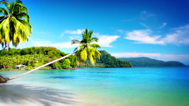 tropical beach - caribbean sea stock videos & royalty-free footage