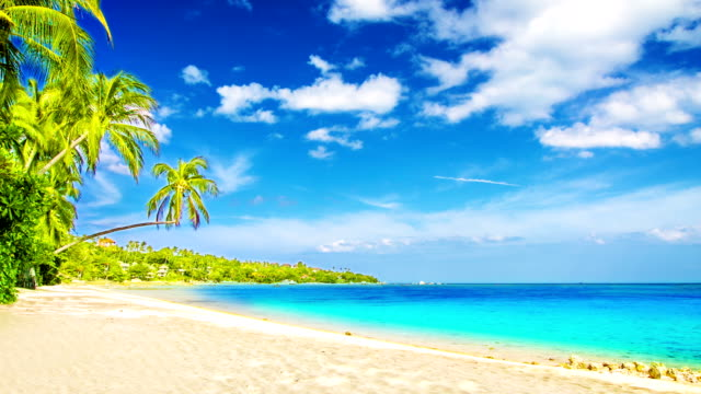 tropical beach - idyllic stock videos & royalty-free footage