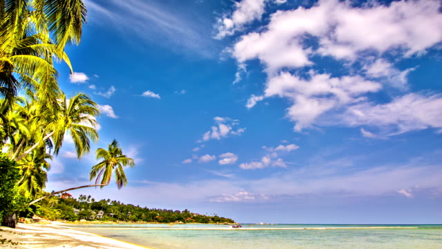 tropical beach - dominican republic stock videos and b-roll footage