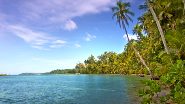 tropical beach - coconut palm tree stock videos & royalty-free footage