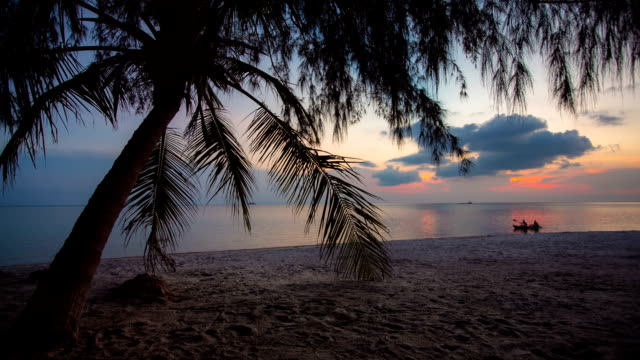 tropical beach - tropical tree stock videos & royalty-free footage