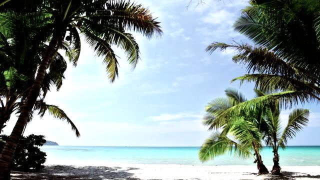 vídeos y material grabado en eventos de stock de playa tropical - tropical