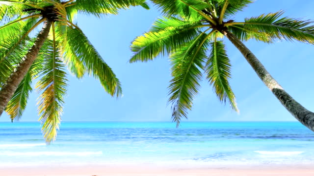 tropical beach - hawaii islands stock videos and b-roll footage