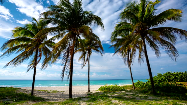 tropical beach with coconut palm trees and turquoise sea - varadero stock videos and b-roll footage