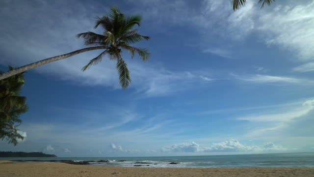 tropical beach with palm tree - tropical tree stock videos & royalty-free footage