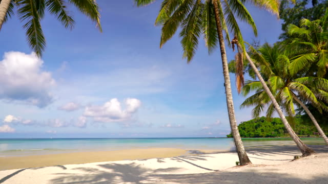tropical beach with palm trees and turquoise blue water - clima tropicale video stock e b–roll