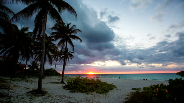 tropical beach with palm trees at sunset, varadero cuba - varadero stock videos and b-roll footage