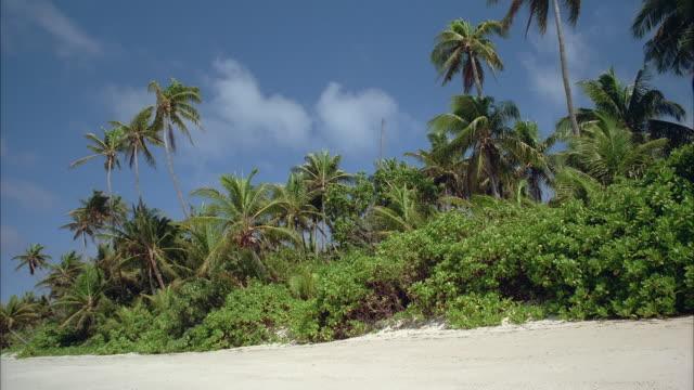 vidéos et rushes de ws tropical beach with palm trees - angle de prise de vue