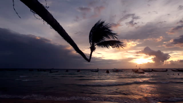 tropical beach with palm - tropical tree stock videos & royalty-free footage