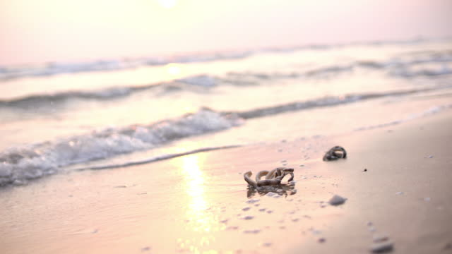 slo mo, タイのヒトデとトロピカルビーチ, 4k - ヒトデ点の映像素材/bロール