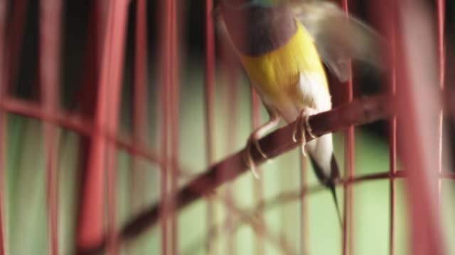 vídeos de stock, filmes e b-roll de tropical bird in cage - encurralado