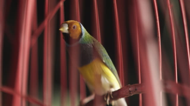 Tropical bird in cage