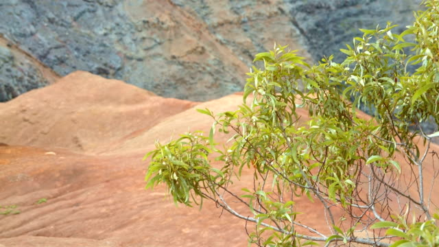 tropical bush and red earth waimea canyon kauai hawaii - tropical bush stock videos & royalty-free footage