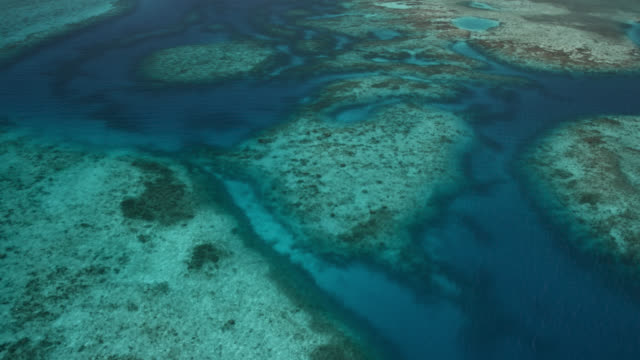 tropical caribbean sea and coral reefs, belize - caribbean sea stock videos & royalty-free footage